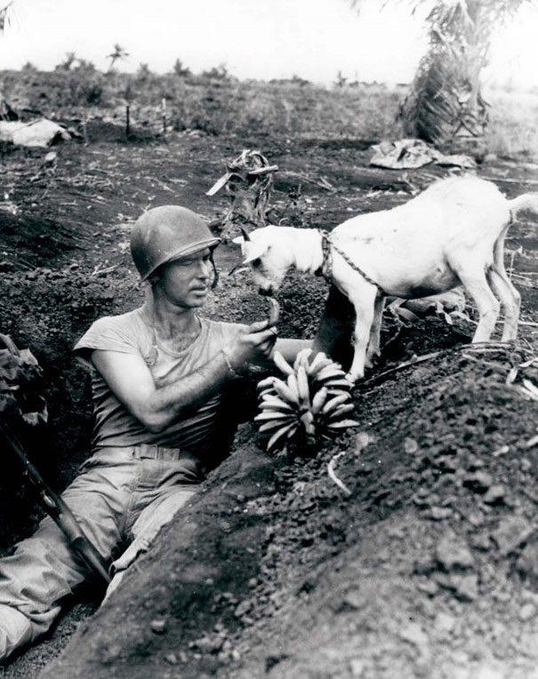 1944ca_Soldier_shares_a_banana_with_a_goat_during_the_battle_of_Saipan