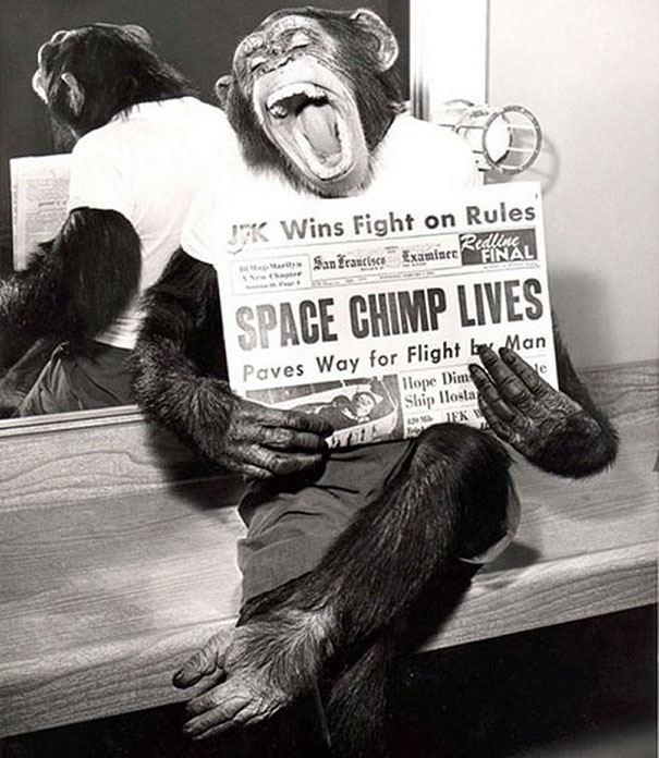 1961_A_space_chimp_posing_to_camera_after_a_successful_mission_to_space